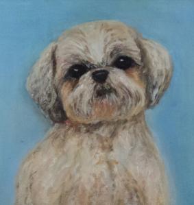 jax, dog portrait
